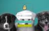 基于SpringBoot开发的宠物医院预约管理系统-P0017